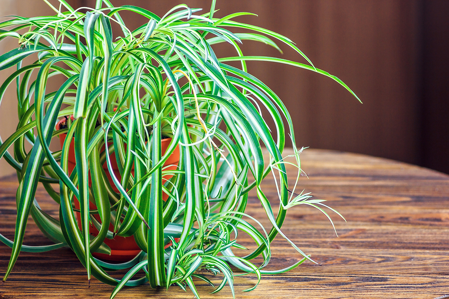 Ten Pet-Friendly Plants to Keep Around The House - Greenwood Hardware