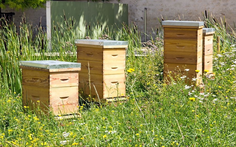 Learn More About Urban Seattle Beekeeping in 2017 - Greenwood Hardware